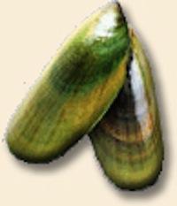 Greenlip mussel oil
