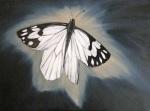Pine White ~ by Nazim Artist http://www.NazimArtist.com