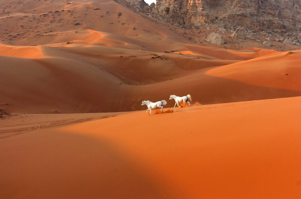 White Horses in Red Dessert ~ Sacred Space