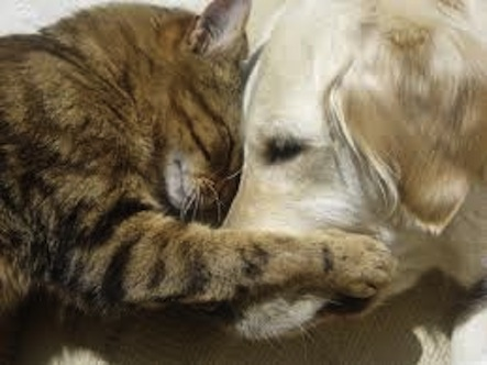 443 cat and dog