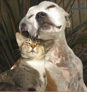 cropped dogs-cats3
