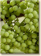 grapes2sms
