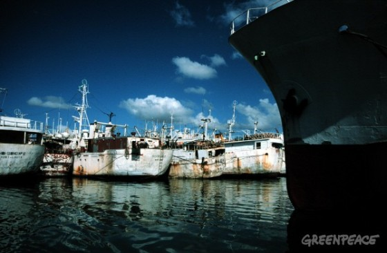"Illegal ""pirate"" fishing vessels in Port Louis. Southern Ocean"