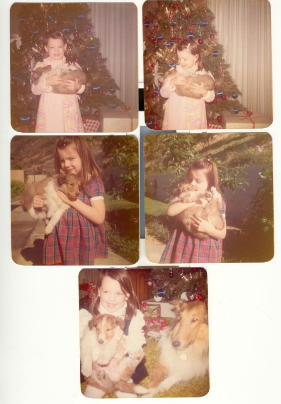 Celeste's AKC registered Collie Lonnie gave birth to two beautiful Lassie pups pictured here with Celeste's young daughter in the early 70's daughter named  Cami.