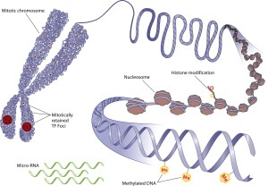 Mechanisms of Epigenetics