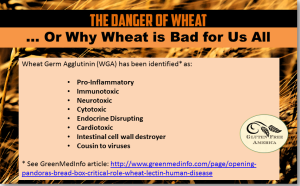 the-danger-of-wheat