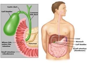 gallbladder_anatomy,_picture_1
