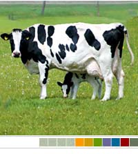 bovine-colostrum