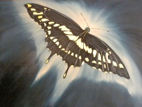 Black Swallow Tail T 4 Vida